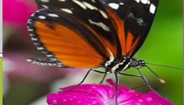 Bioetica e biodiritto, le relazioni scivolose