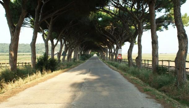 LETTERA APERTA: Caro Enrico Rossi, spiegami perché vuoi l'autostrada Tirrenica